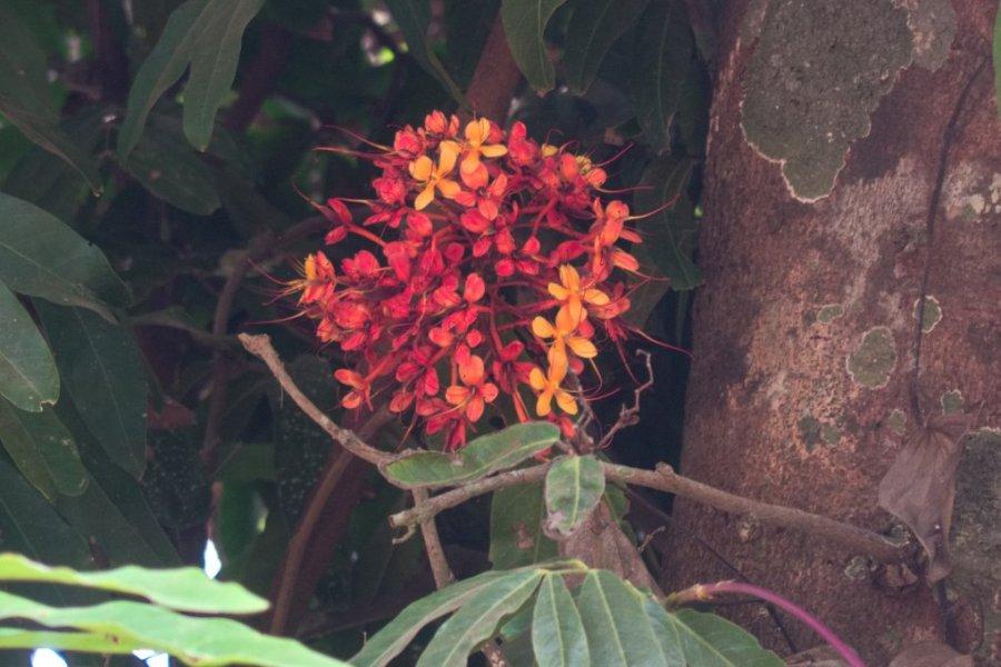 Mangalore (25)